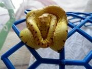 Краснодарский центр по разведению рептилий